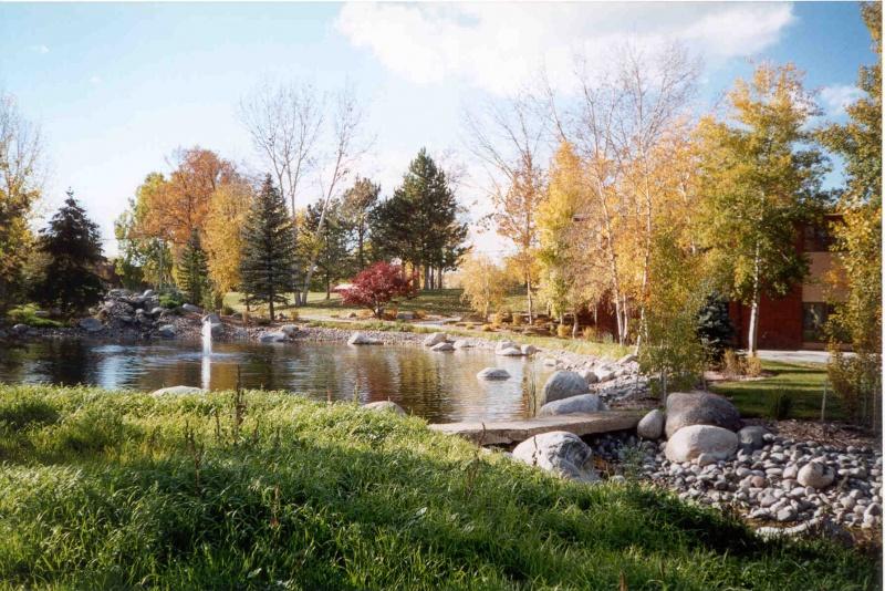 Ponds fall 4