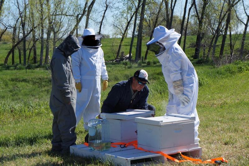 Tending to beehives-1