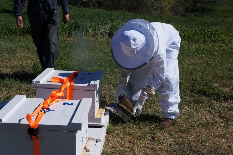 Tending to beehives-2